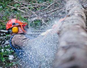 Boomverzorger zaagt boom in stukken