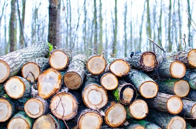Gestapelde gekapte bomen