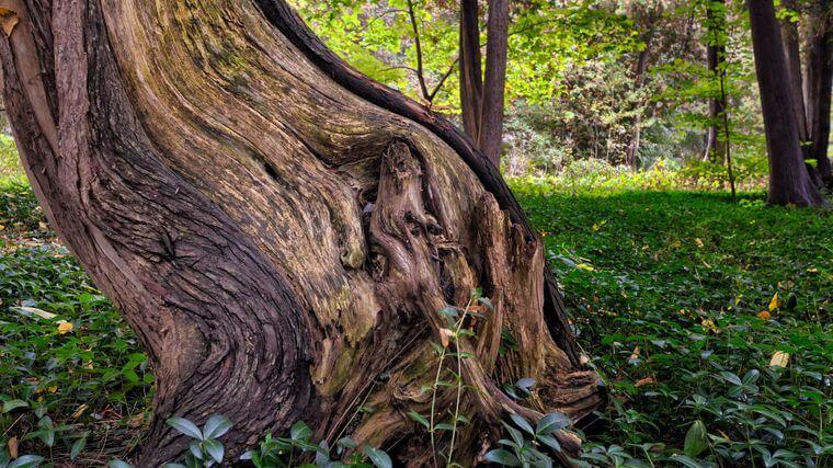 Gevaarlijke dode boom
