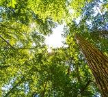 Vergunning nodig boom kappen